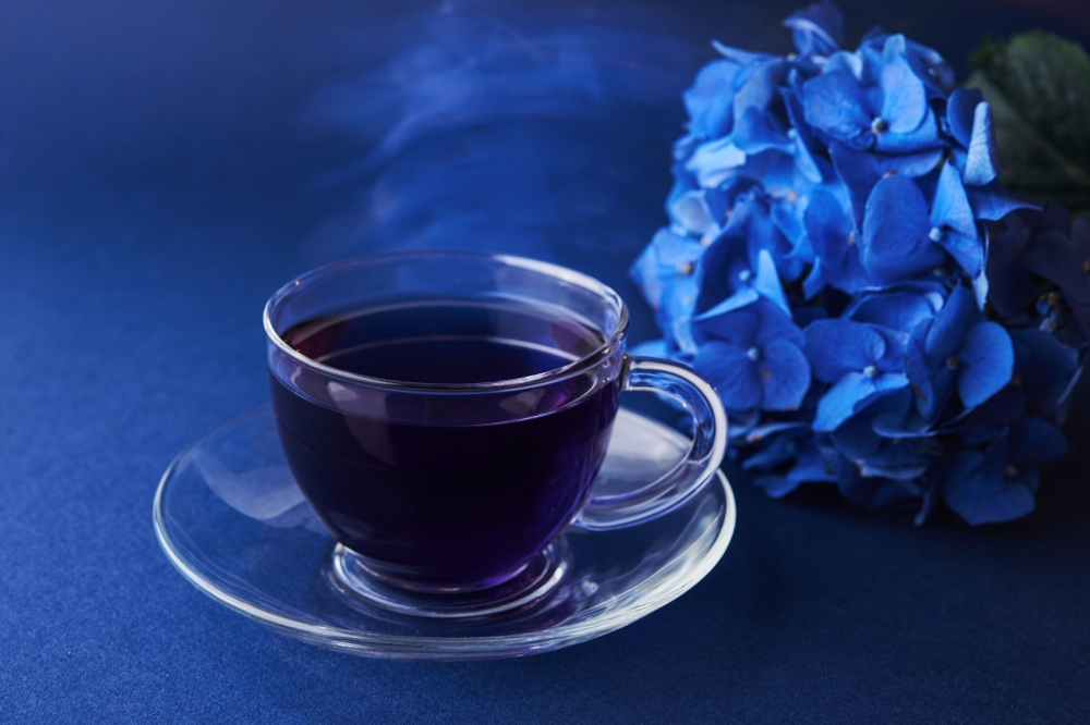 Cup Of Butterfly Pea Tea And Hydrangea On Blue Background